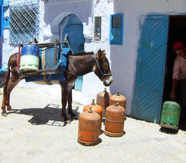 donkey-2427532_1920